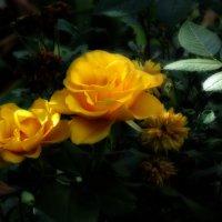 Осенние солнышки :: Тамрико Дат