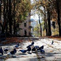 Киевская осень 2014 Фото №1 :: Владимир Бровко