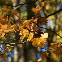 Осень... :: Serega Денисенко