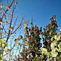 осень,деревья :: Татьяна Королёва