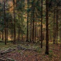 Шишкин лес :: Olga subbotina