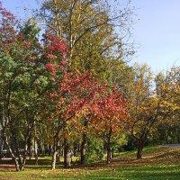 Осень в парке Мендовского :: val-isaew2010 Валерий Исаев