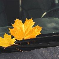 Осень... :: Анна Борисова