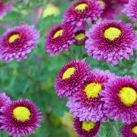 осенние цветочки :: Anastasia Alieva