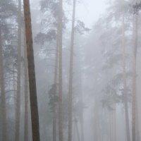 Туман..  туман... :: Валерия  Полещикова
