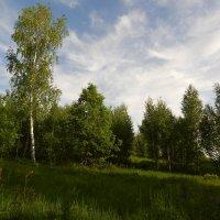 На лесной полянке :: Татьяна ***