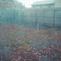 Осень, а скоро зима :: Света Кондрашова