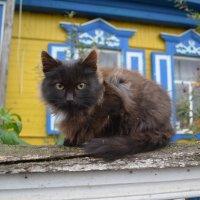Кошка :: Лилия Саванец