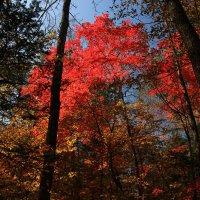 Осенние краски Уссурийской тайги :: татьяна