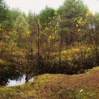 лес :: Ксения Грибанова