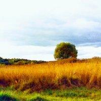 Осенние поля :: Olga Korableva