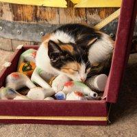 Кошки Крита :: Anna Lubina