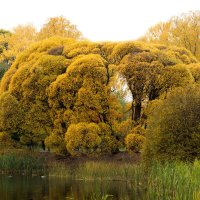 Золотая осень :: Ivan Divak