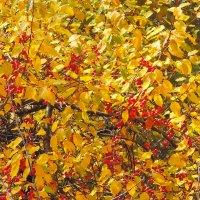 Город. Осень. Последние краски. Октябрь. :: Геннадий Александрович