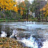 Осенний пруд :: Наталья Левина