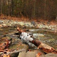 Осенний ручей.   3 :: Николай Елисеев