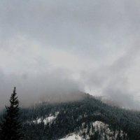 Туман в горах. Зима 2013 года :: Ольга Иргит