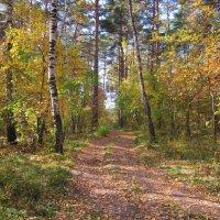 В густом лесу. Дорога. :: Мила Бовкун