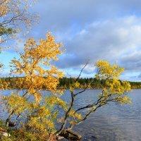 Всё прозрачнее осень... :: Ольга