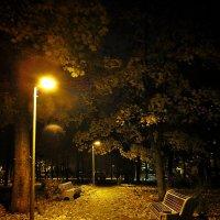 Ночь в парке... :: Ирина Князева