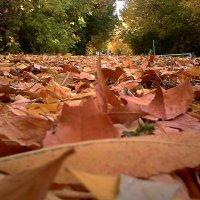 осень :: МИХАИЛ КАТАРЖИН