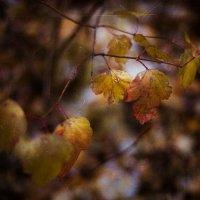 Осенний сплин... :: Анна Беляева