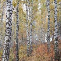 Осенняя дорога :: Ольга Ольга