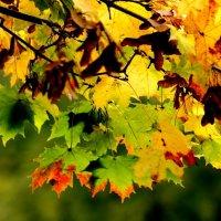 Осенние листья :: Людмила Шнайдер
