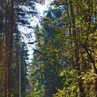 В Черняевском лесу :: val-isaew2010 Валерий Исаев