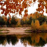 Осенние отражения :: Татьяна Ломтева