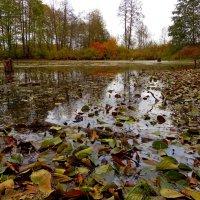 Осень . . . :: Константин Фролов