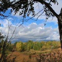 forest :: Oksana Nesterova