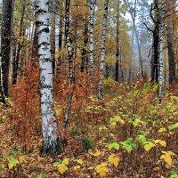 Листьев золотых лесные россыпи... :: Лесо-Вед (Баранов)