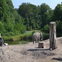 Вольер для слонов :: Lyubov Zomova