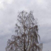 Одинокая :: Sergey Kuznetcov