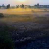 Утро, туман... :: Юрий Стародубцев