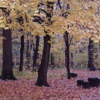 Осень в лесопарке. После дождя.. :: Ната Волга