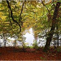 У лесного озера. :: Валерия Комова