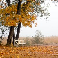 Осенняя грусть :: Татьяна Петранова
