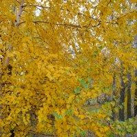 Последние зелёные листочки... :: Танюша Коc
