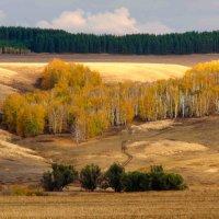Золотая осень :: Владимир Грачев