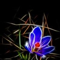 первый цветочек :: Владимир Родин