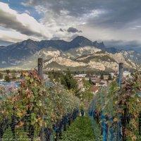 Виноградники в Саргансе :: Александра Зеро