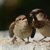 кинь на язычек! :: linnud