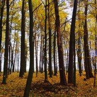 Осенний лес. :: Антонина Гугаева