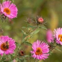 Добрый полосатый мух :: Мария Зайцева