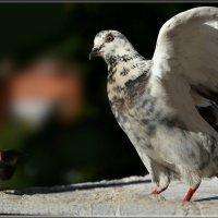кто меня звал? :: linnud
