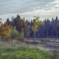 моя осень :: Александр Абакумов