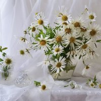 Белый вальс хризантем... :: Валентина Колова