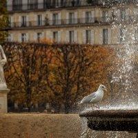 Осень в Париже :: Ростислав Бычков